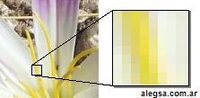 Imagen que muestra los píxeles constituyentes de una imagen digital