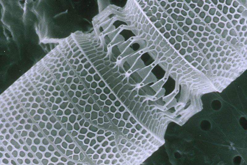 Nanotubo