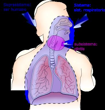 Sistema respiratorio humano visto como sistema.