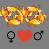 Kærlighed    kompatibilitet Fiskene kvinde og Fiskene mand